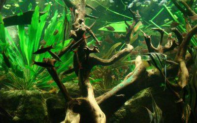 Akvárium Amazona