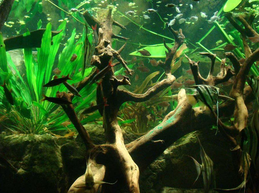 Aquarium Amazona
