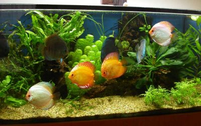 History discus for Aquarium 600l