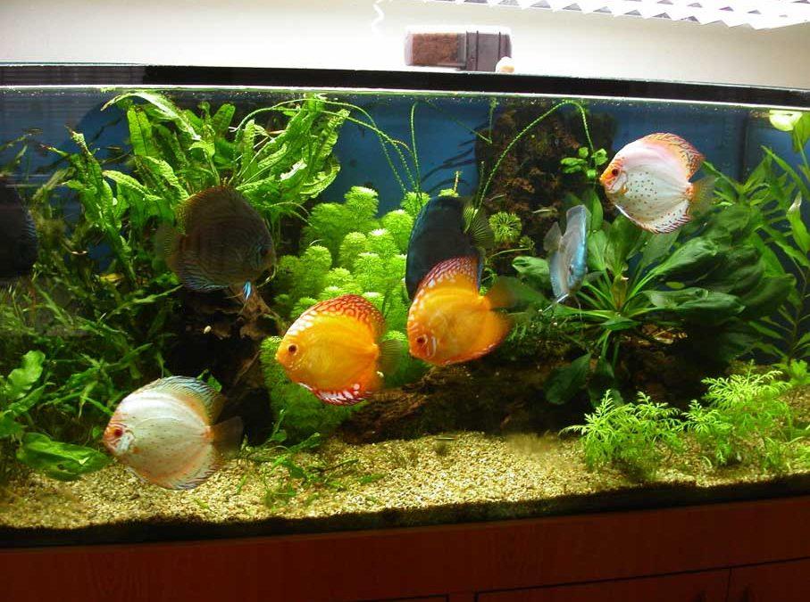 Rastlinné akvária 300l a 600l